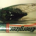 cicada_energizer_josh