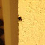 cockroach_trixie