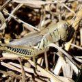 differential_grasshopper_anna