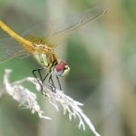 dragonfly_france_chris