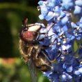 drone_fly_ventura