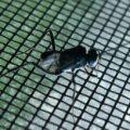 ensign_wasp_tina