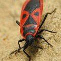 firebug_