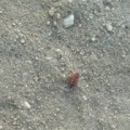 firebug_hernet_ca