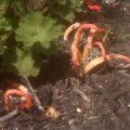 fungus_dave
