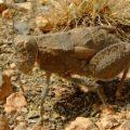 grasshopper_namibia