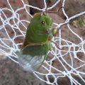 green_grocer_australia_lc