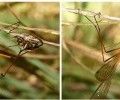 hanging_fly_hunting_montage_australia_trevor_1