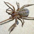 hobo_spider_jason