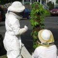 honey_bee_hive_capture_taborhood_honey