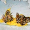 honeybee_hive_flowerpot_jeff