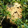 hornets_nest_resa