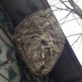 hornets_nest_ryan