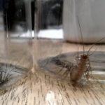 house_centipedes_ann