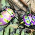 jewel_bugs_china_erin