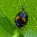ladybird_chris