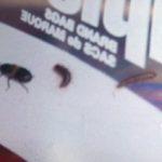 larder_beetle_larvae_alaska