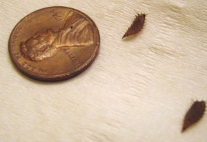 We Stand Corrected Fly Larvae Not Seeds What S That