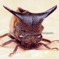 leafhopper_asyraf