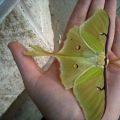 luna_canada_20110607