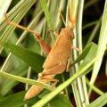 mischievous_bird_grasshopper_karen