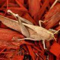 mischievous_bird_grasshopper_karen_20110825