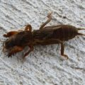 mole_cricket_tim