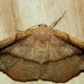 moth_brian