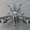 moth_capetown