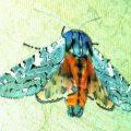 painted_arachnis_mrsd