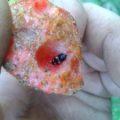 picnic_beetle_roxy