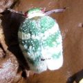 planthopper_india_sukhie