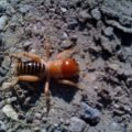 potato_bug_montana_paul