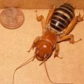 potato_bug_rain