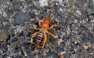 Potato Bug In Washington State What S That Bug