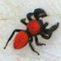 red_jumper_oklahoma