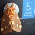 regal_moth_handicap_sheila