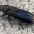 rove_beetle_jerry