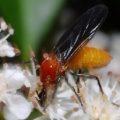 sawfly_australia_mike
