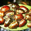 shield_bugs_singapore