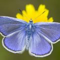 silver_studded_blue_slovakia_open