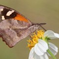 snout_butterfly_jennifer
