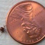 spider_beetle_philadelphia