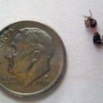 spider_beetles_tc