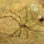 spider_family_kentucky