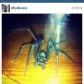 spider_francine