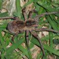 spider_lusaka_zambia