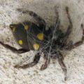 spider_montenegro_aalexaa