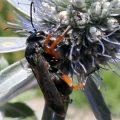 spider_wasp_anna_ca