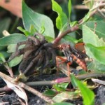 spider_wasp_foodchain_greg